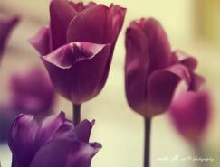 自然的艺术:美丽花卉摄影欣赏