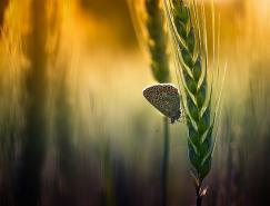 匈牙利AndrasFejes美丽的自然摄影