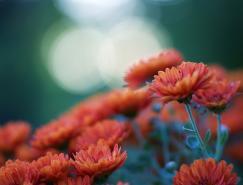 JacobEdmiston漂亮的花卉摄影
