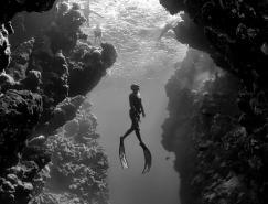 惊人的水下摄影作品