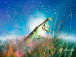 马来西亚摄影师李佩玲:微距镜头下的昆虫