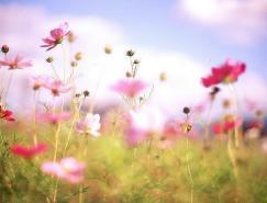 日本摄影师Setsuna花卉摄影