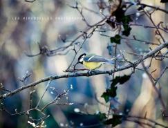 意大利摄影师LauraEsse迷人的自然摄影