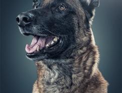 DanielSadlowski:狗狗肖像摄影