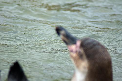 摄影教程:如何拍摄精美的动物照片