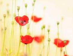 漂亮唯美的花卉摄影欣赏