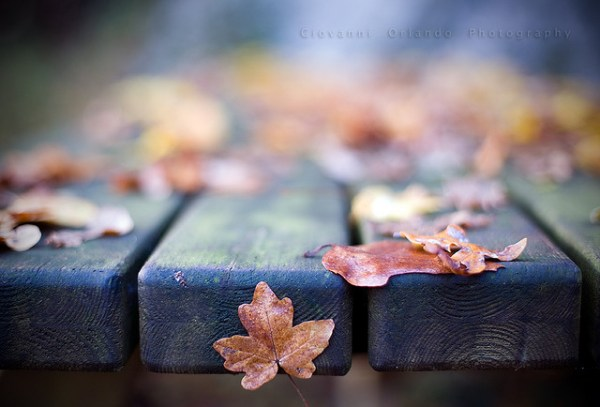 25张美丽的秋天风景摄影