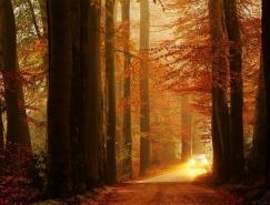 NellekePieters迷人的森林摄影