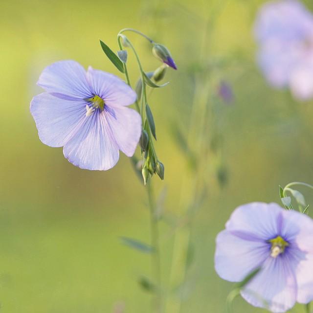 LarriCochran美丽的花卉摄影