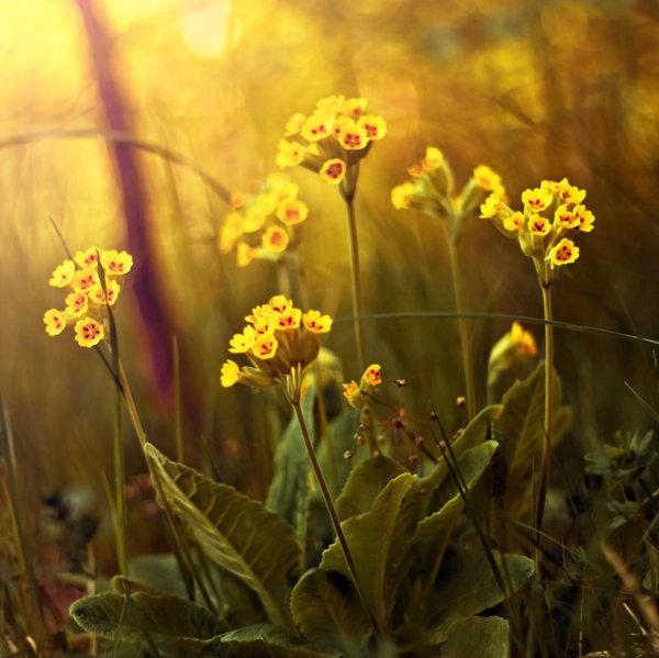 Pawel Matys美丽的自然摄影 设计之家