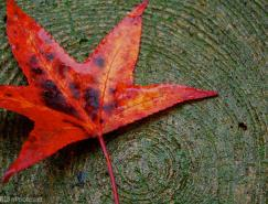 12招教你捕捉秋天的颜色