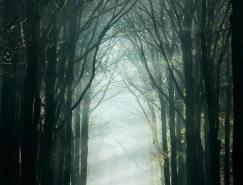 德国摄影师NellekePieters宁静的森林摄影