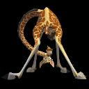 长颈鹿麦尔曼