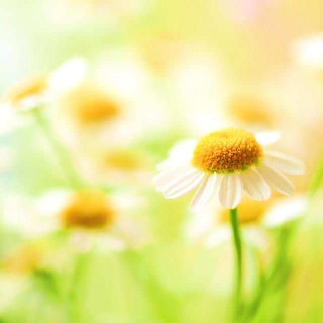 sweetheart*梦幻般的花卉摄影