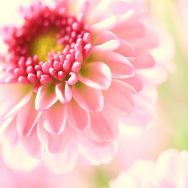 花唯美意境图片