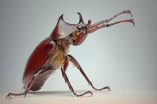 2#高清昆虫头像微距摄影欣赏_摄影欣赏_作品欣赏; 一组完美的昆虫微
