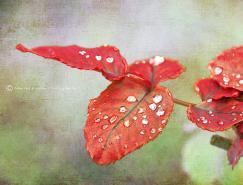MariloBou植物和花卉摄影