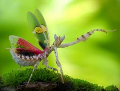 越南摄影师Adegsm微距作品欣赏