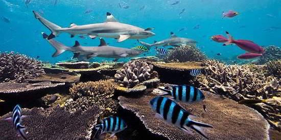 神奇的水下世界:美丽的海底动物摄影
