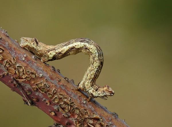 pawel bieniewski独特的微距昆虫摄影(2)