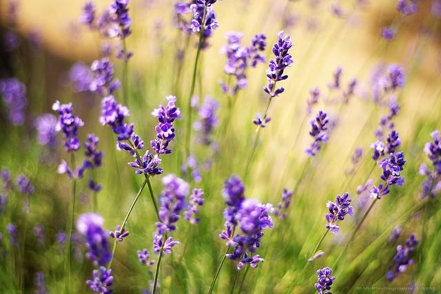 Levente Bodo美丽的自然摄影欣赏