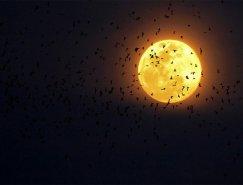 40个令人惊叹的月亮摄影