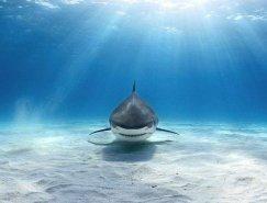 疯狂的水下摄影佳作