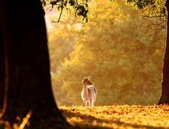 Mark Bridger动物摄影欣赏:鹿
