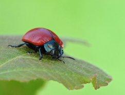 Pawel Bieniewski独特的微距昆虫摄影