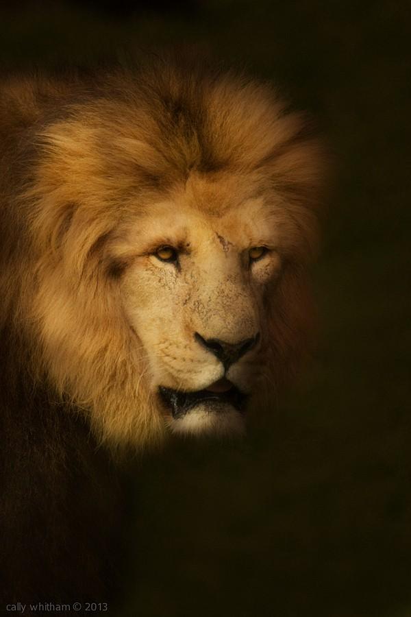 whitham漂亮的动物肖像摄影