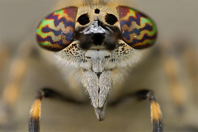25张惊人的动物眼睛特写(3)