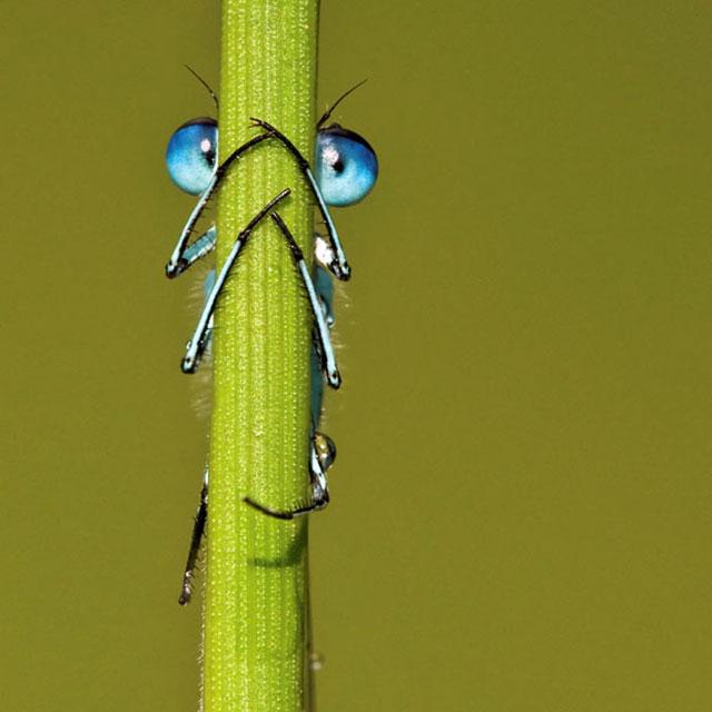 25张惊人的动物眼睛特写(4)