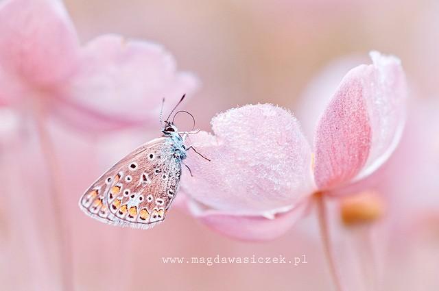 Magda Wasiczek漂亮的自然摄影