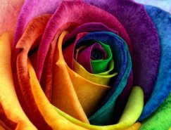 Mark Johnson美丽的花卉微距摄影佳作