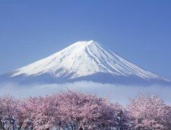 摄影欣赏:美丽樱花盛开的季节