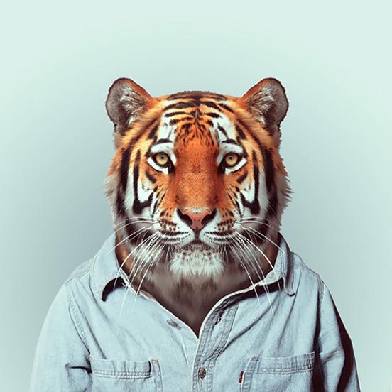 """《动物园肖像》(Zoo Portraits)是巴塞罗那摄影师Yago Partal创作的一个趣味摄影集。在这组照片中,他给各种可爱的动物穿上人类服装,并让它们像人一样""""出现""""在镜头前,留下一张标准肖像照。 这些照片在展示摄影师幽默感的同时,也表现了他的个人风格和品位。从穿着冬季毛衣的黑熊,到穿着夏威夷衬衫的猪。这些动物所穿的服装都尽量能揭示它们的内心特征。"""