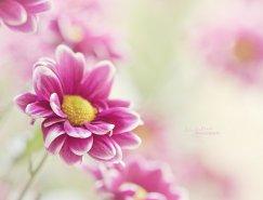 荷兰摄影师Helaine花卉摄影欣赏