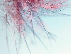 Mia Minor漂亮的花卉摄影欣赏