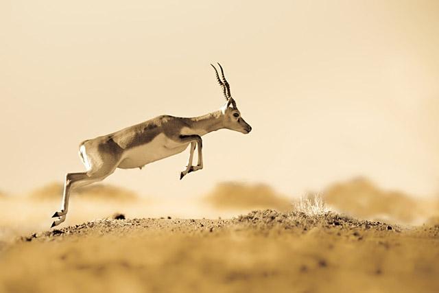 40个野生动物摄影作品欣赏(3)
