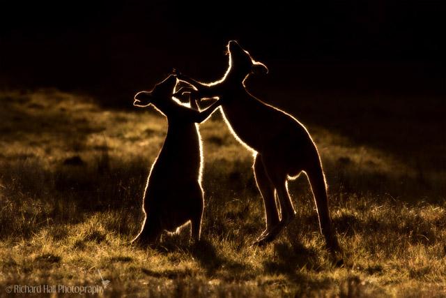 40个野生动物摄影作品欣赏(4)