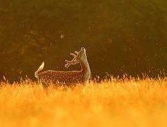 40个野生动物摄影作品欣赏