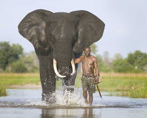 动物摄影欣赏:大象