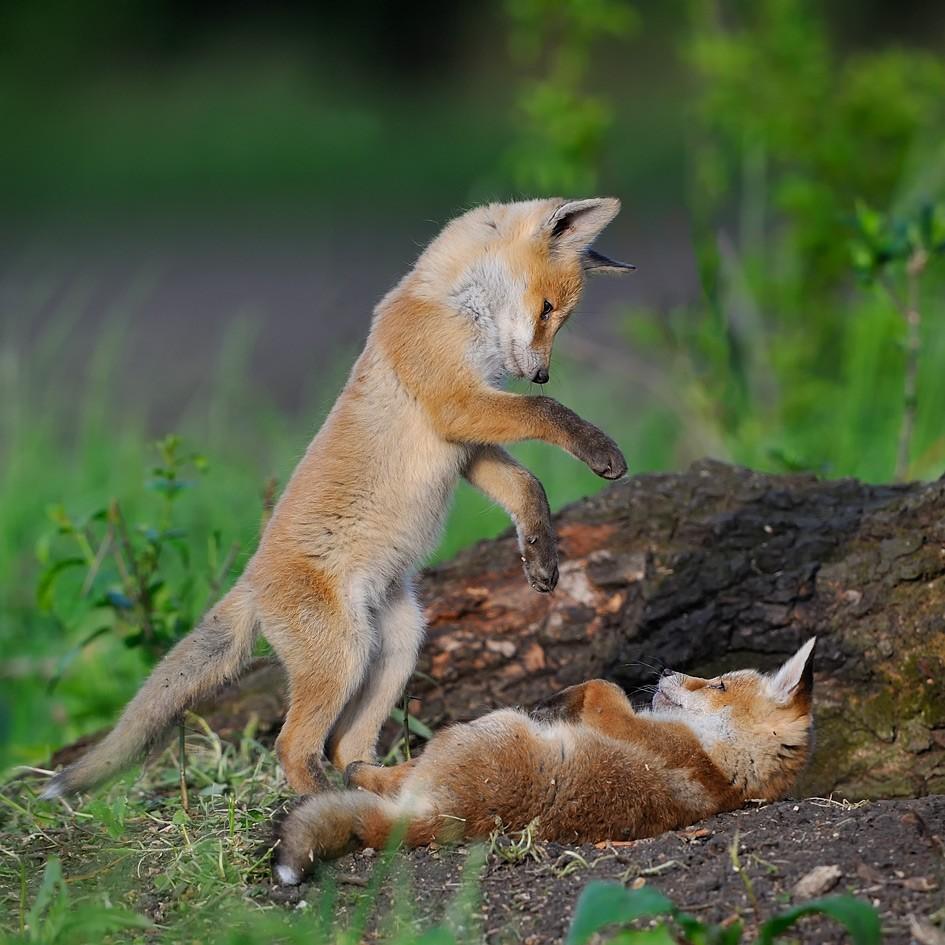 动物摄影欣赏