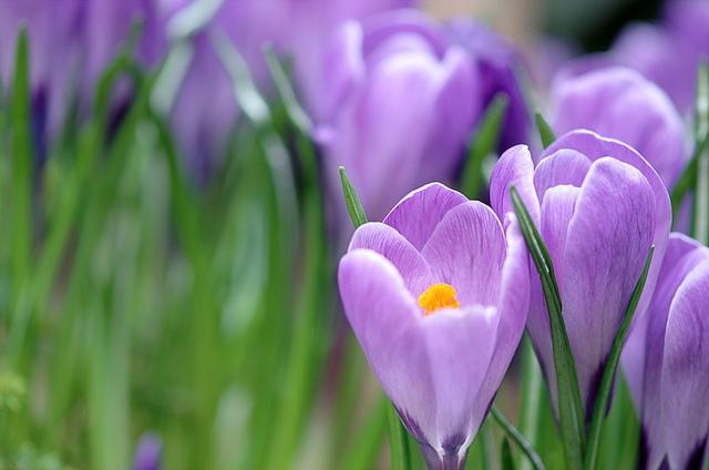 Bellatchitchi漂亮的花卉摄影作品