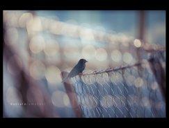 Daniela Romanesi创意摄影欣赏