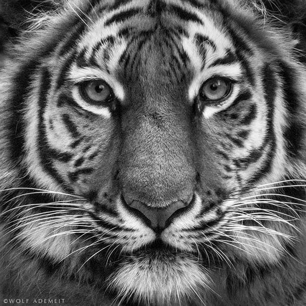 ademeit动物肖像摄影