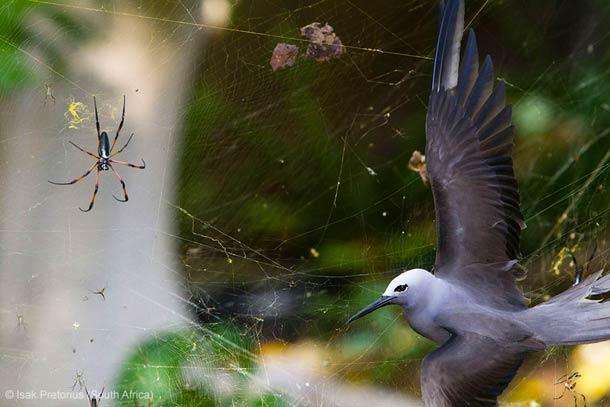 2013年度的野生动物摄影大赛获奖作品欣赏