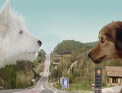 雪铁龙新C3广告:狗狗的爱情