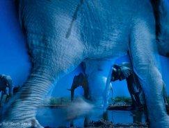 2013年度的野生动物摄影大赛获