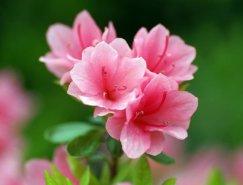 Photoshop打造古典韵味的花卉特写图片